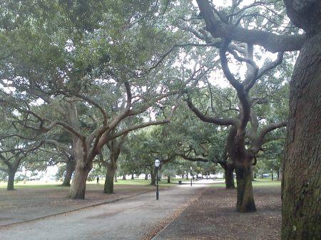 Live oak park